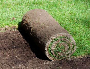 A roll of sod